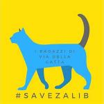 #SaveZalib: come la cultura può creare comunità e perché è importante difenderla.